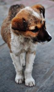 puppy-288965_640