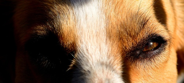 dog-1408535_1280