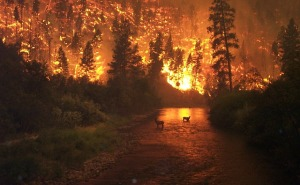 forest-fire-62971_640