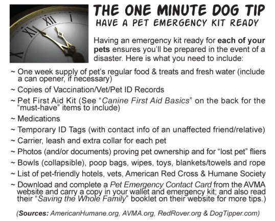 One-Minute-Dog-Tip-June