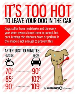 Too-hot-in-cars-for-dogs