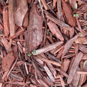 mulch-70901_1280