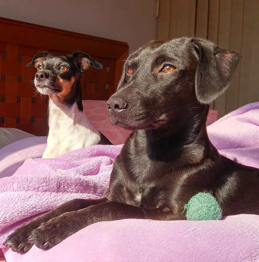 dogs-1816853_1280