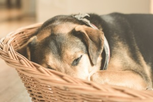Give Your Dog a Safe Place to Relax