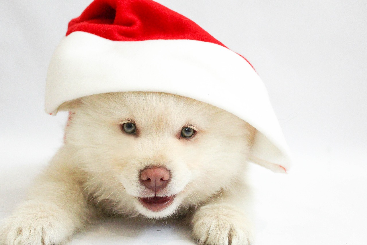 christmas-1874259_1280
