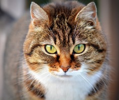 Your Cat Depends on You To Protect Her!