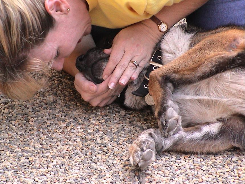 Dog CPR Involves Artificial Resuscitation