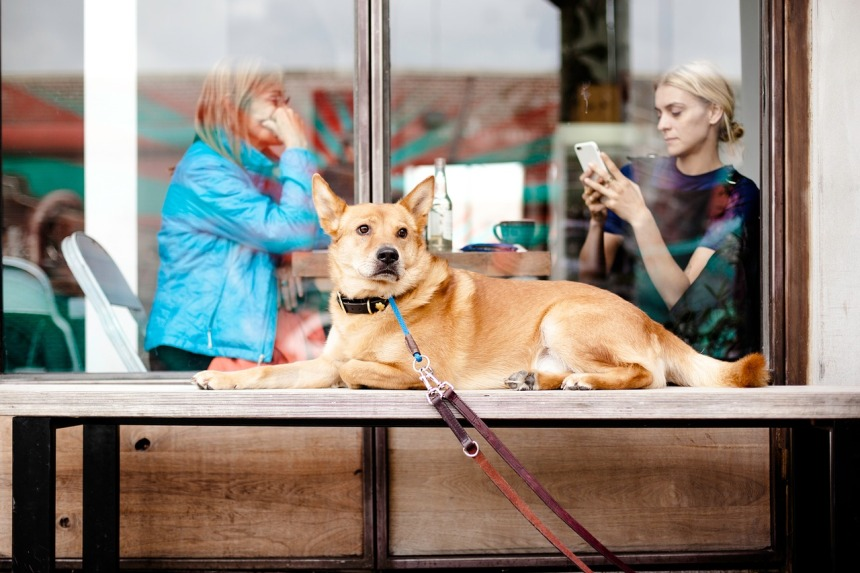 We All Love Our Pets, But Who is the Better Pet Parent?