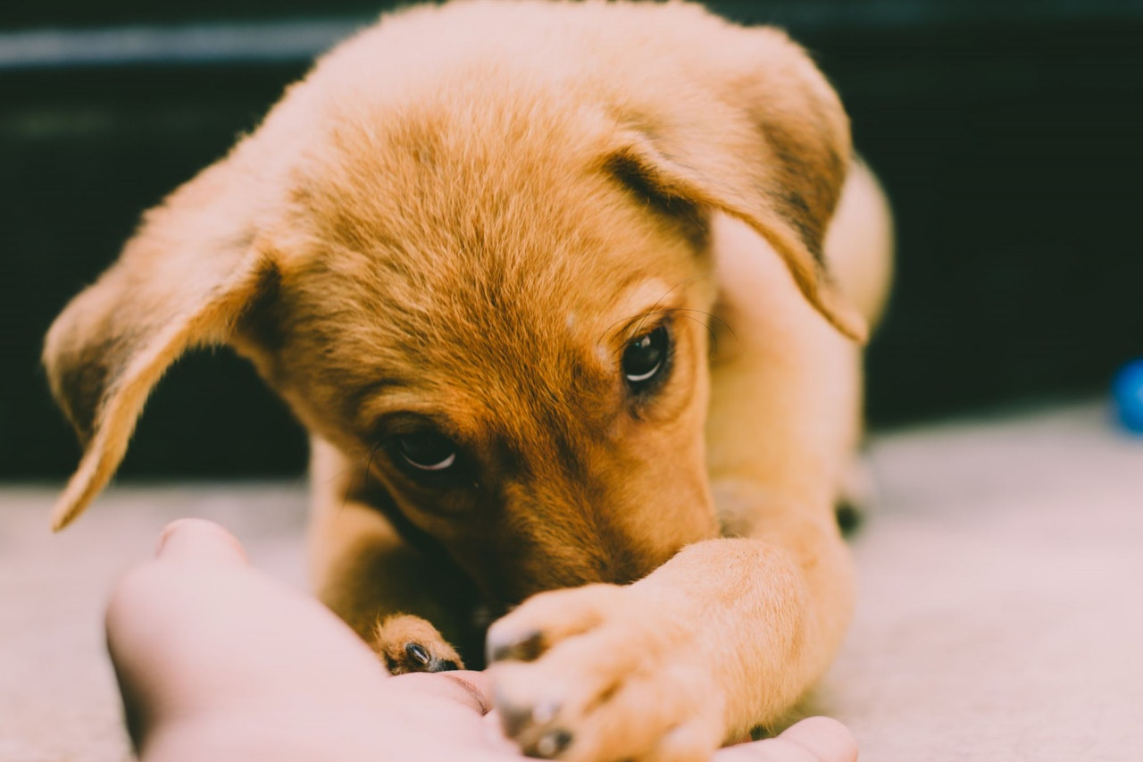 puppiesbiteandnipwhilelearning-1